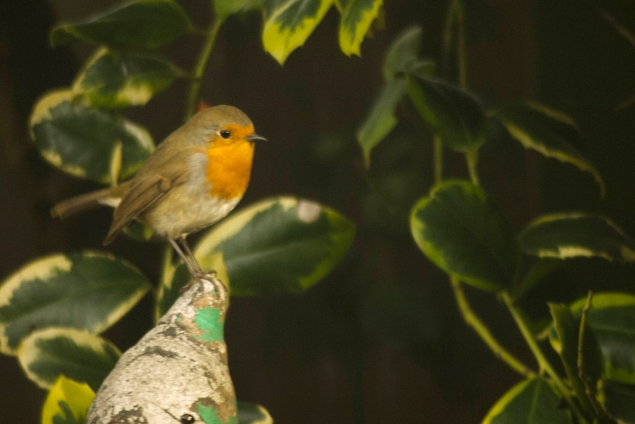 I was lucky enough to have this little guy say hi to me whilst I was clearing a garden, thankfull...