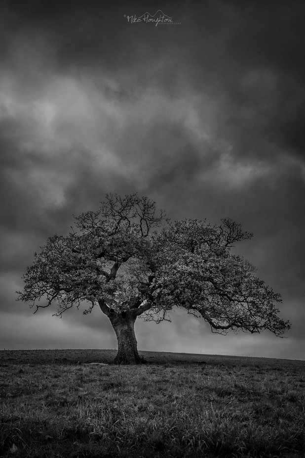 Moody oak by mikehoughton - Black And White Landscapes Photo Contest