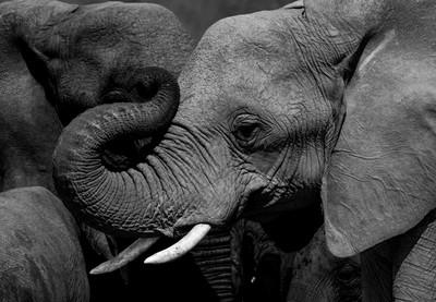 Etosha - Elephants
