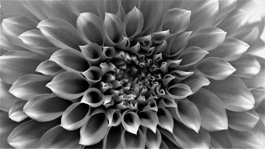 The eternal darkness inside a petal shows, its depth infinite. The brightness of the tips of each...