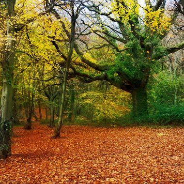 Porthkerry Park in it's finest Autumn colours.