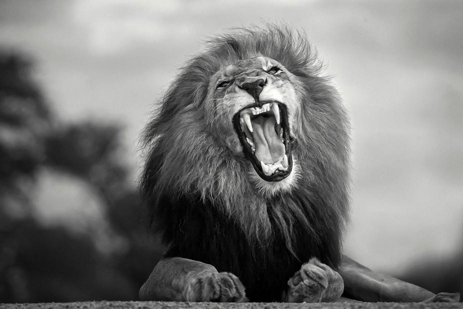 Ufoto Africa by Francois Malano