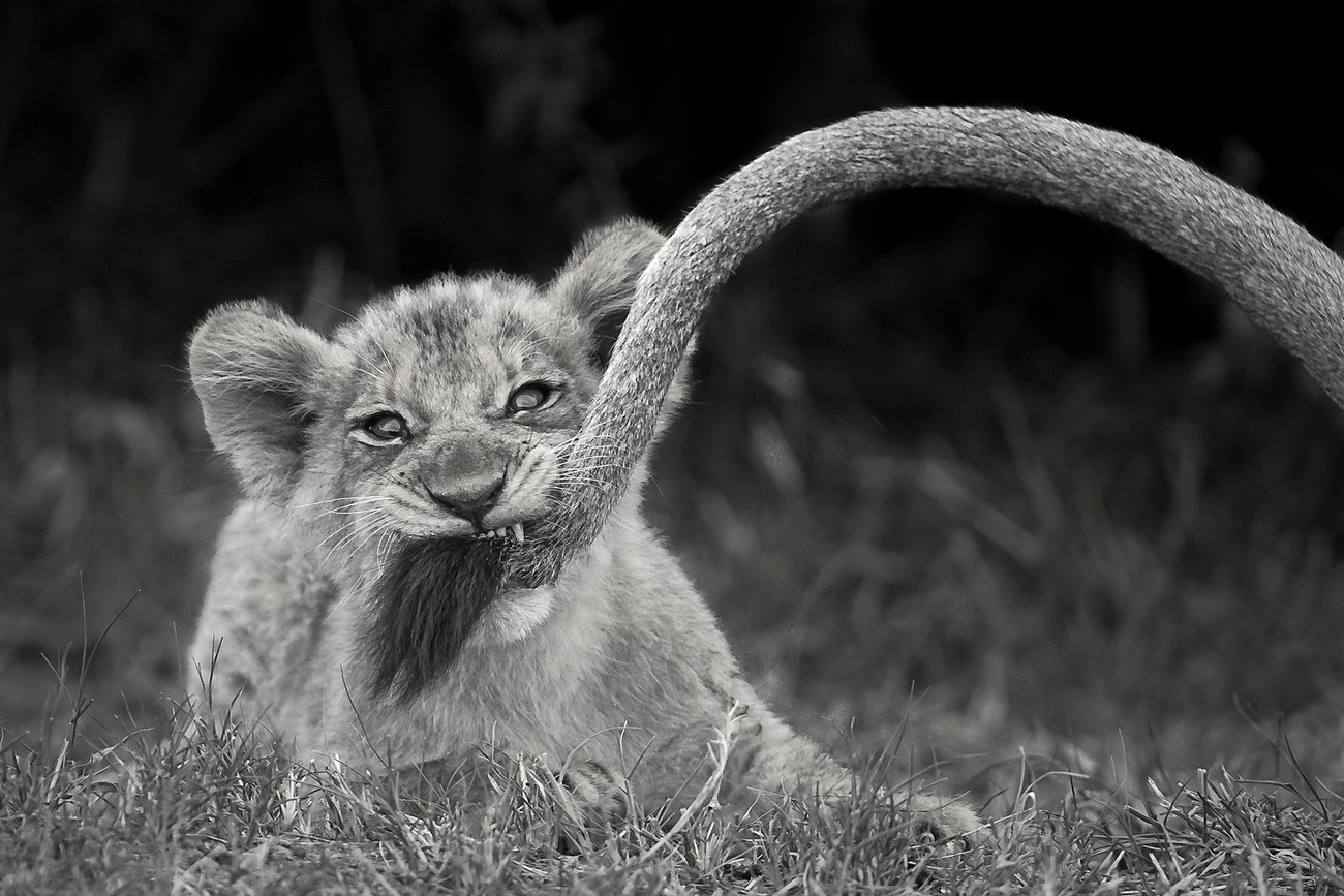 Animals In Black And White Photo Contest Winners