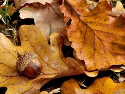 Fruits of Autumn