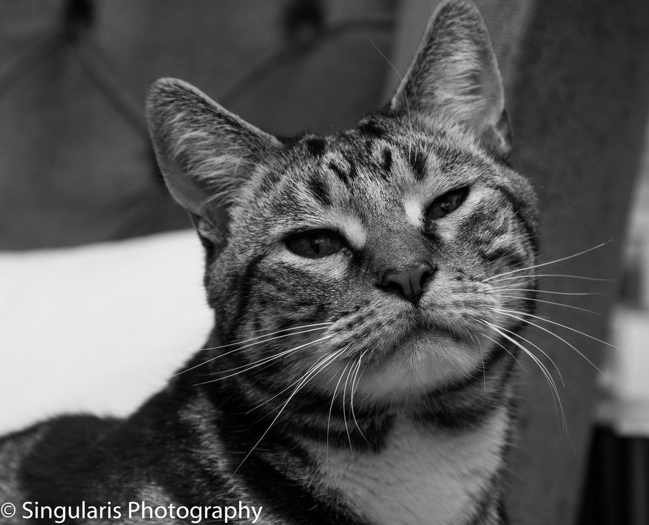 Whilst photography Gerry at home, Sherbet kept a close watch.
