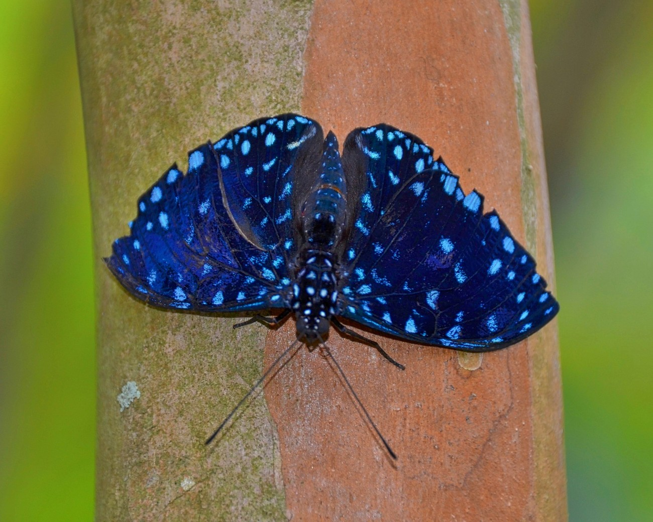 Beautiful and uniquely colored butterfly.  Taken at Butterfly World in Coconut Creek Florida