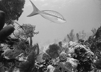 Belize, 35 mm film, Nikonos V