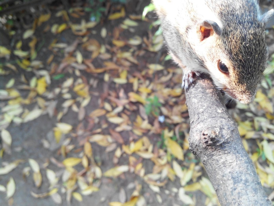 The one and only love of my life my pet squirrel Gillu.Love u a lot