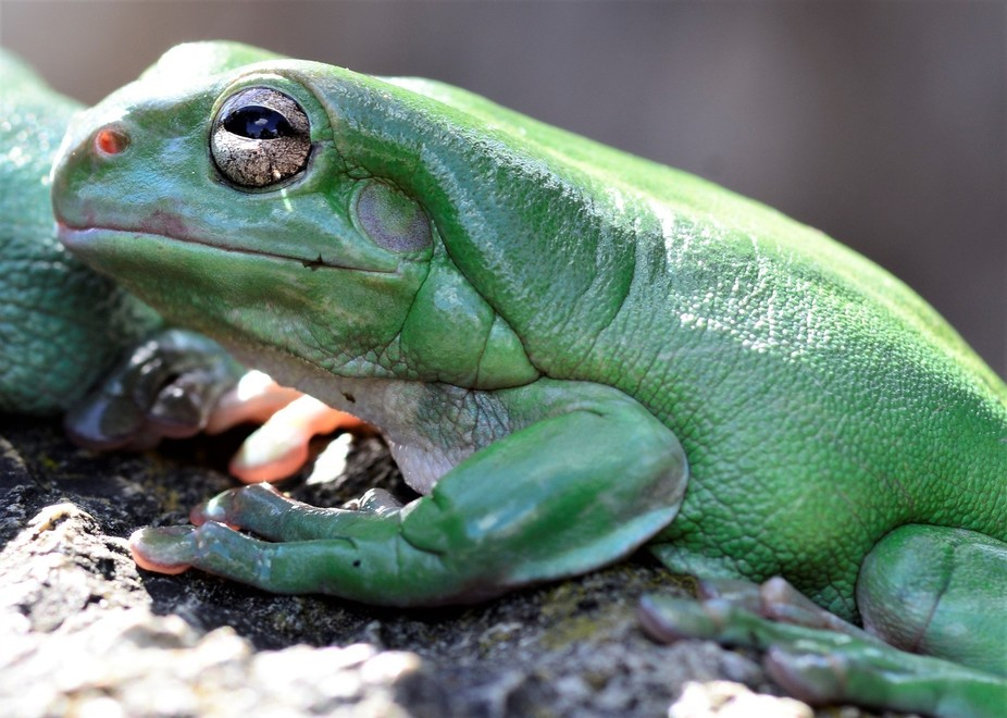 I just love green frogs and their character