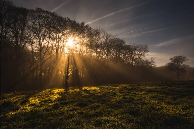 Golden Sun by PaulGJohnson - Tree Silhouettes Photo Contest