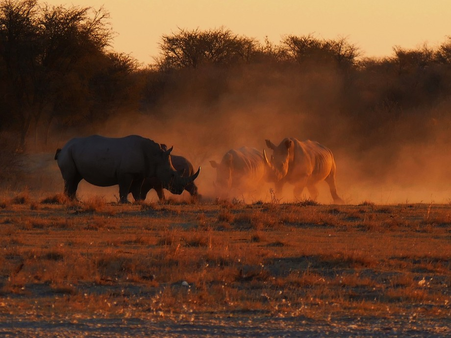 Sunset at a Water Hole in a Game Reserve in Central Botswana