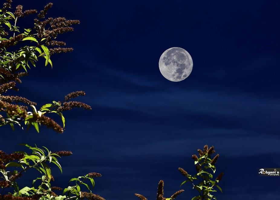Lovely blue hour -Super moon