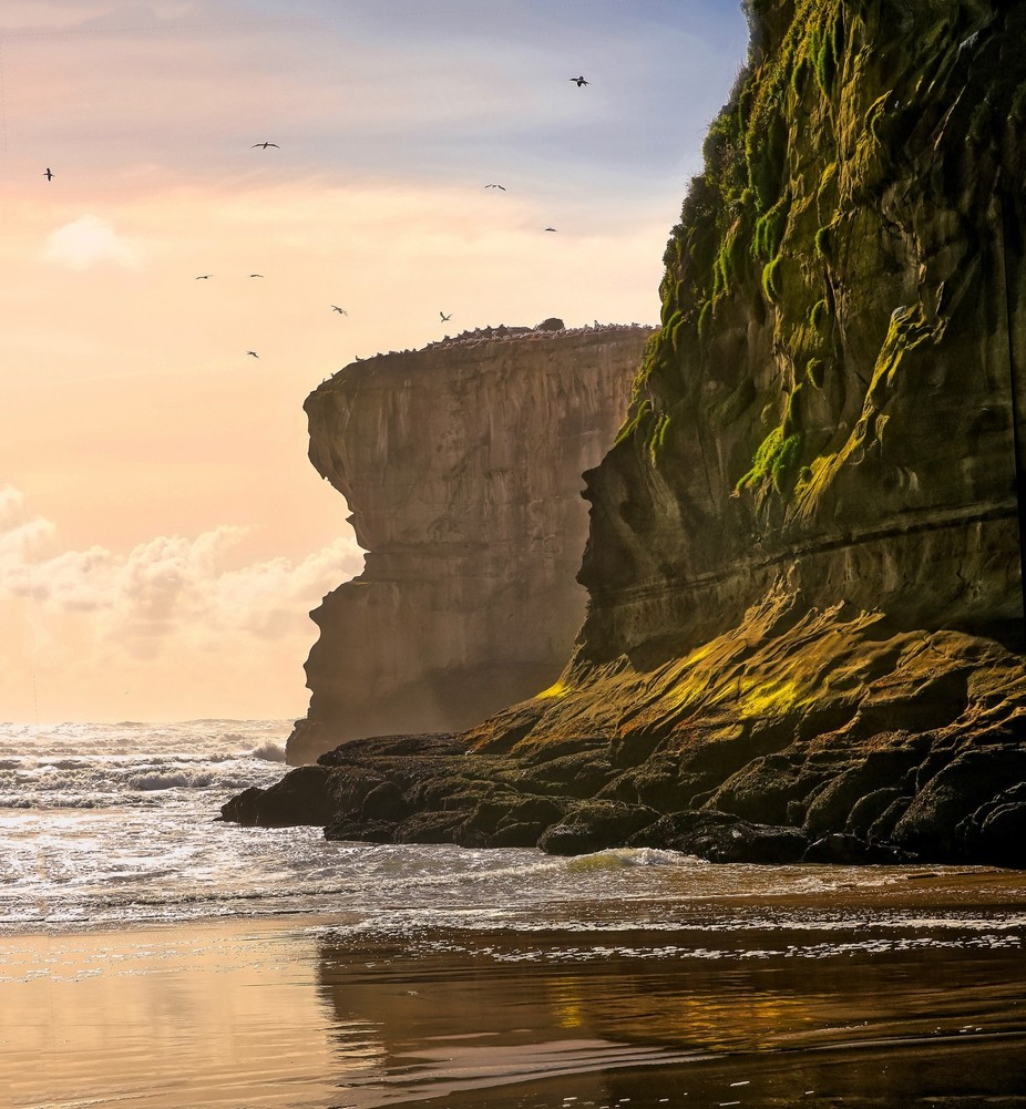 Muruwai gannet colony by johankoch - Spectacular Cliffs Photo Contest