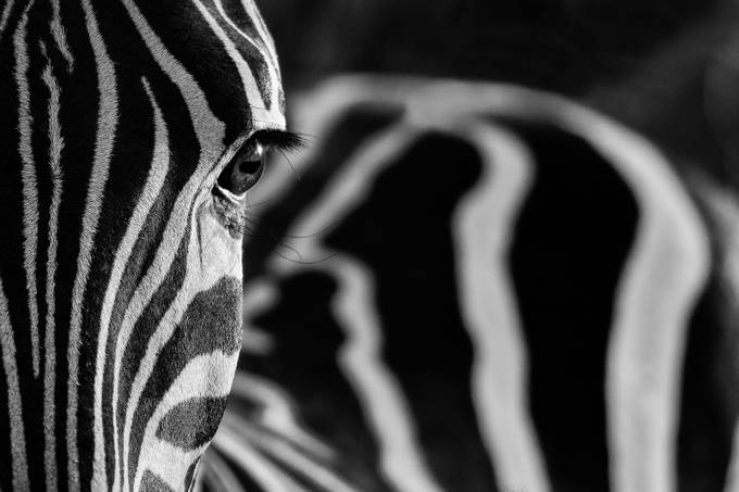 Stripes by charlesjorg - Patterns In Black And White Photo Contest