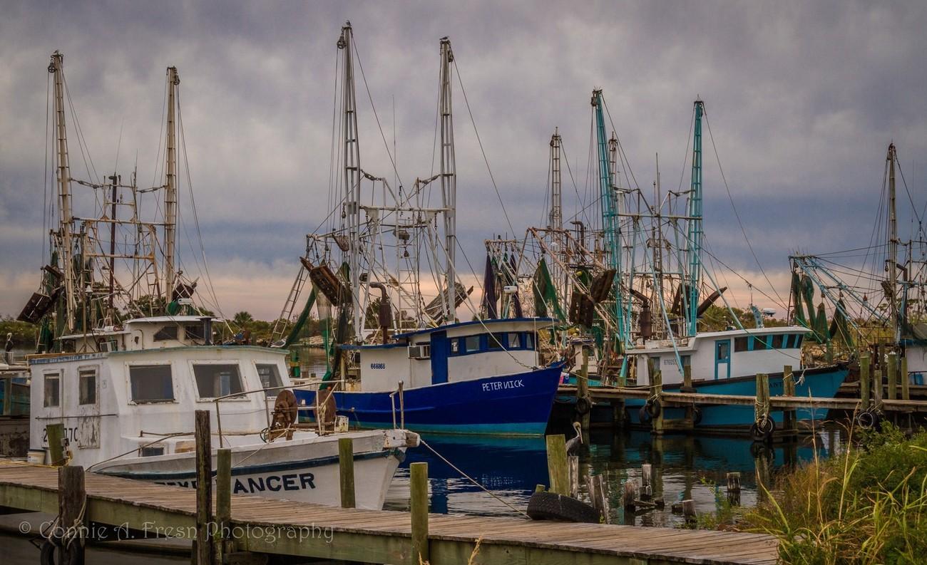 Row of shrimp boats