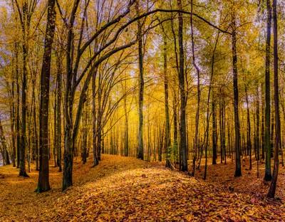 Walkway in the autumn woods