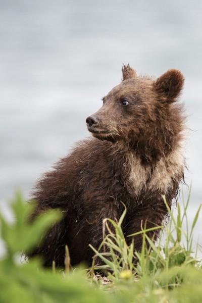 Fuzzy Bear Cub