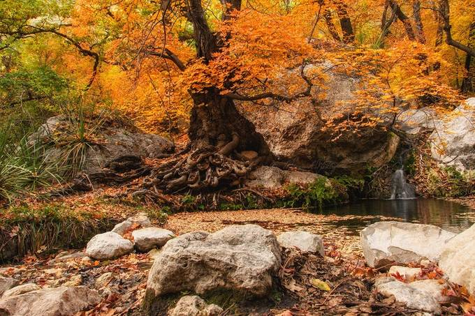 Smith Spring @ GMNP by melaniegentry - Fall 2017 Photo Contest