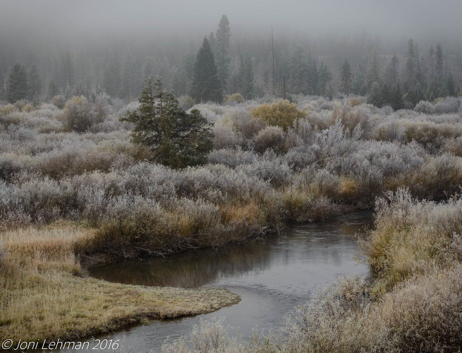 The marshes near Salmon Lake in the fall during a foggy, misty morning
