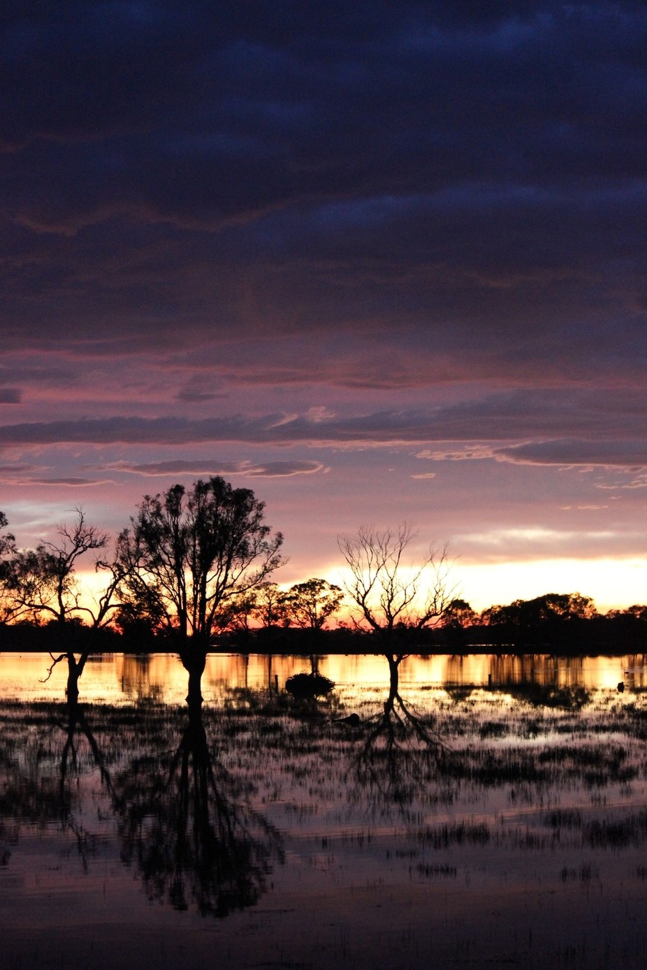 Taken at dawn at wetlands in Gippland Victoria