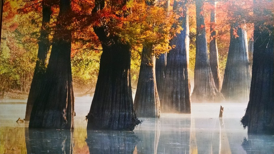 Cypress trees in the fall. Great place to fish but famous for wasp nests.