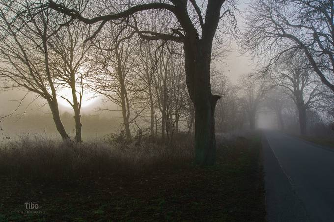 mystic mist by Celtic - Mist And Drizzle Photo Contest