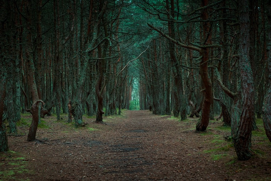Road to the dancing forest