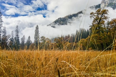 El Capitan Meadow on a Cloudy Day