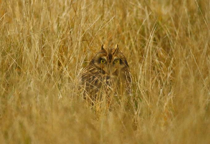 Hidden by kellywiens - Can You See Me Photo Contest