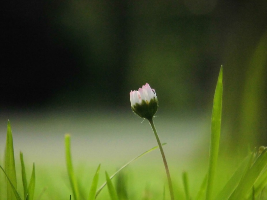Just saw this lonely little wild flower near me, one day when I was relaxing in a park.