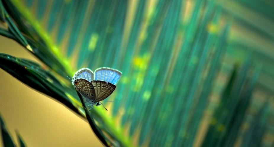 nature through lens :)