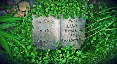 Bea's Garden