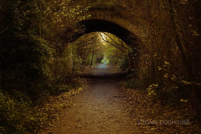 THE FOREST by carl_doghouse - Shooting Tunnels Photo Contest