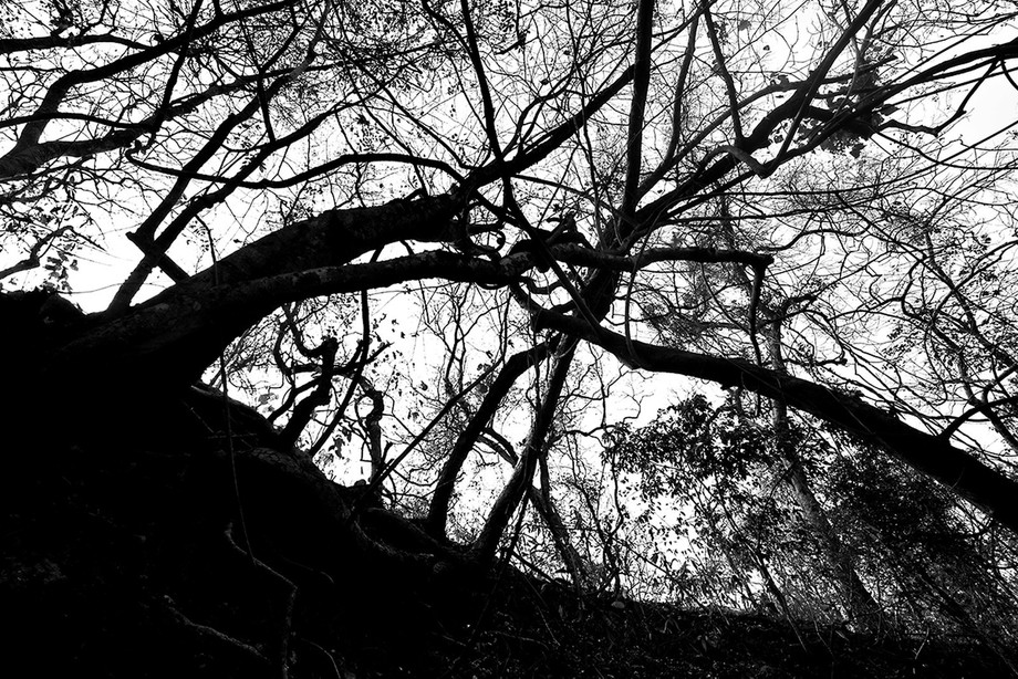 I was amazed to see these branches tied up together. The low angle gave more drama.