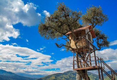 The most beautiful treehouse