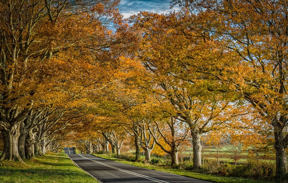 We had a really great year for autumn colour and these trees were beautiful on the day