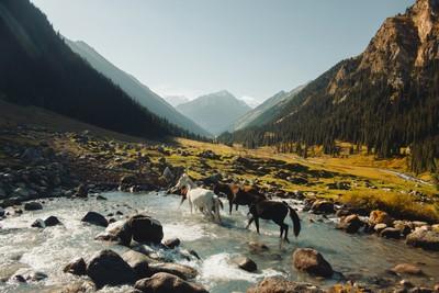 Horses in Altyn Arashan valley