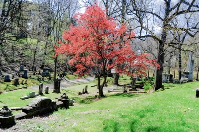 Cemetery Red