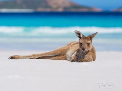 Beach Roo