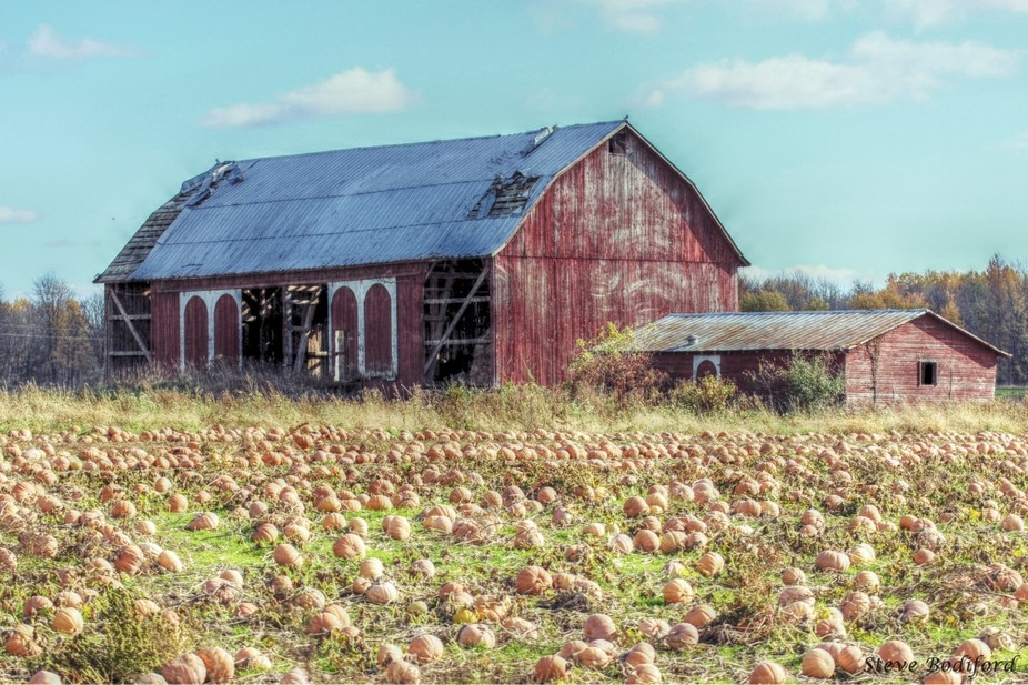 Old Pumpkin Patch