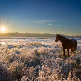A horse staring into the sun, warming up after a cold night. The whole landscape is frozen and the slight mist defuses the sun beautifully.