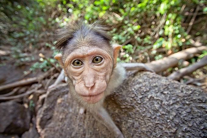Human being by sgarifullin - Monkeys And Apes Photo Contest