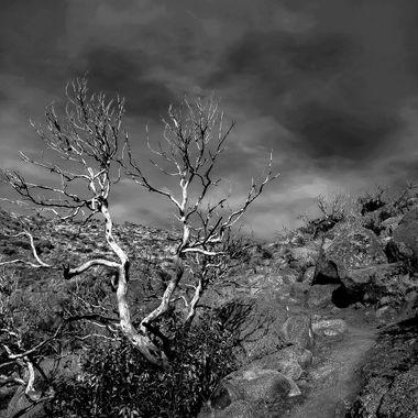 Weaver Mtns. near Yarnell, Az