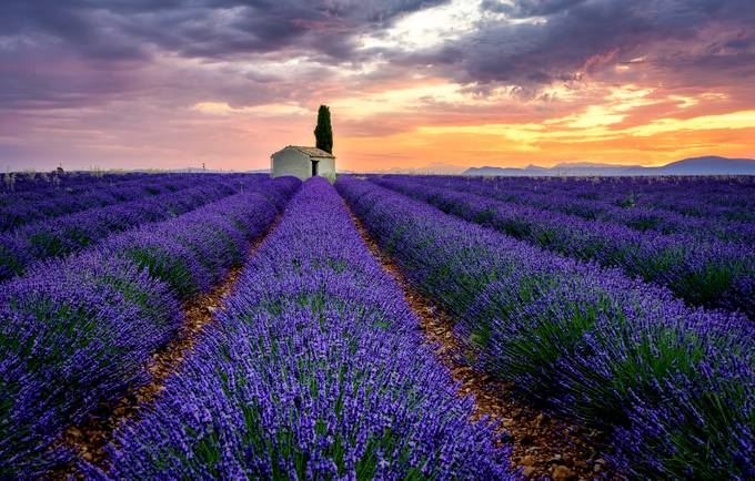 Provence innocence by MartinDolinsky - Unforgettable Landscapes Photo Contest by Zenfolio