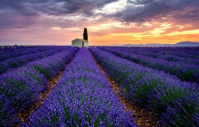 Provence innocence