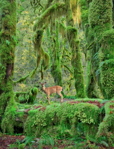 Doe in an enchanted forest
