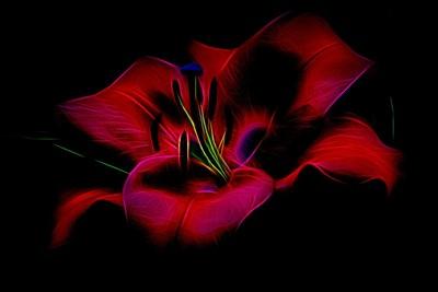 Beautiful Flower.