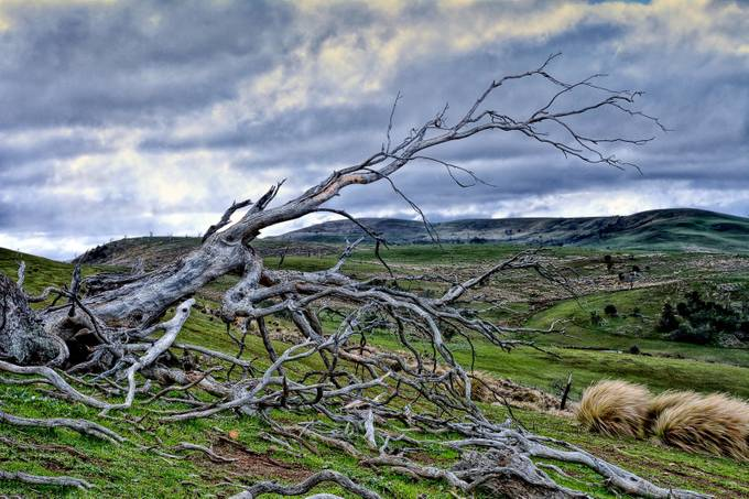 Old fallen tree reaches out over the valley.