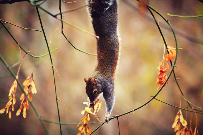 Just hanging around! by Mstagc - Fall 2017 Photo Contest