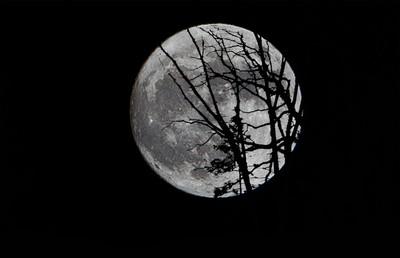 """November 2016 Super Moon """"Beaver Moon"""""""